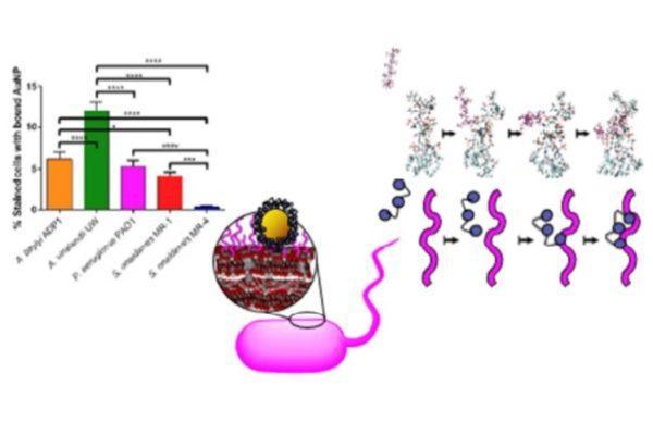Buchman_ESNano2018_BacterialPanelNanotox_TOC